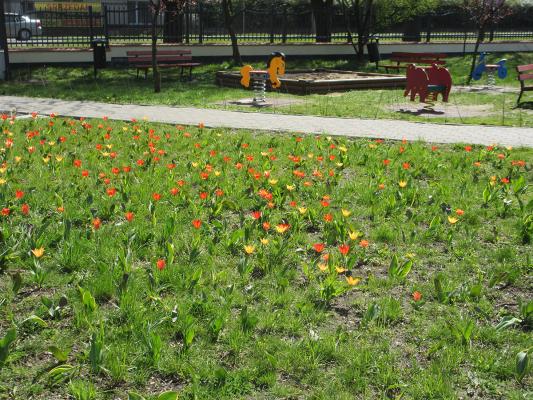 wiosna w gminie _7